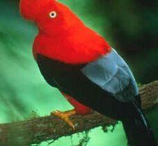 Turismo en el Perú: Observar aves