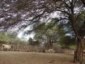 bosque-seco-ecuatorial