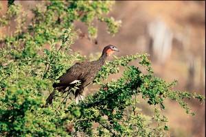 Ecoturismo en el Perú: Chaparri