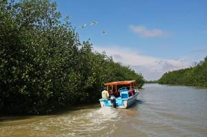 manglares-tumbes