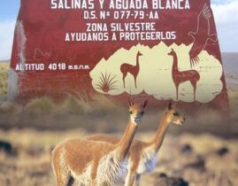 Perú Turismo: La reserva nacional Salinas y Aguada Blanca