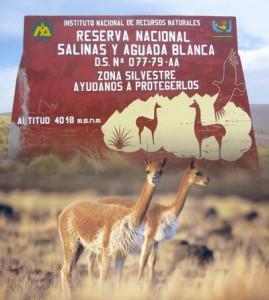 reserva-nacional-de-salina-y-aguada-blanca