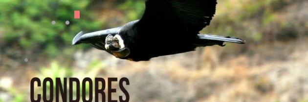 Santa Eulalia Lugar Para Observar Aves