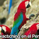 5 Lugares para el Birdwactching en el Perú