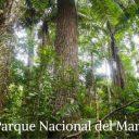 Los Bosques del Perú