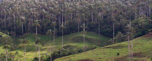 Molinopampa en Chahapoyas – La Selva De Las Palmeras