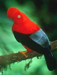 turismo-en-el-Peru-aves