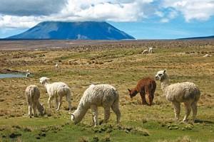 reserva-nacional-de-salinas-y-aguada-blanca