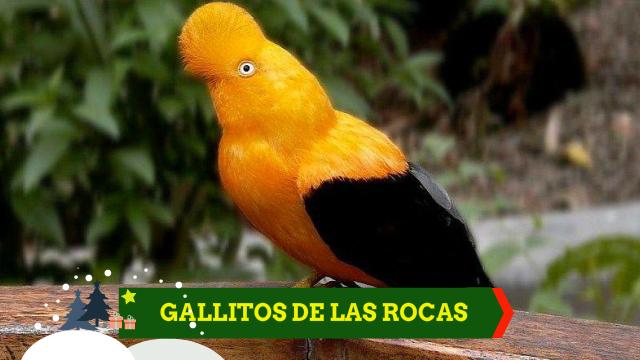 Turismo para observar aves en el Perú | birding | Birdwatcher